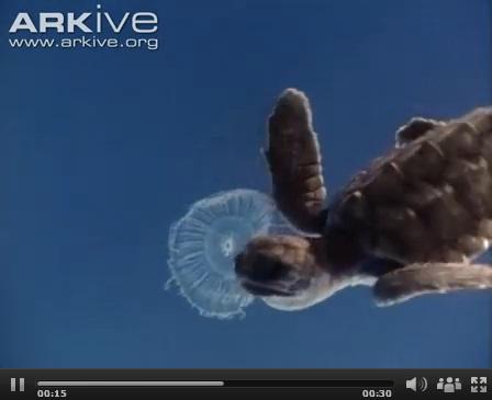 turtlejellyfish